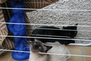 La tente des chats